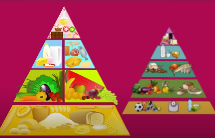 e-learning ● A táplálékpiramis