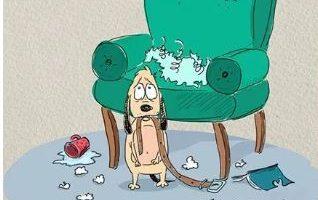 Kutya-macska galádság