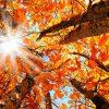 Mit tett az ősz?!