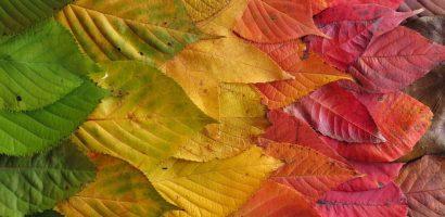 Miért színesek az őszi levelek?