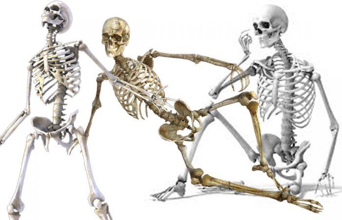 A csontok