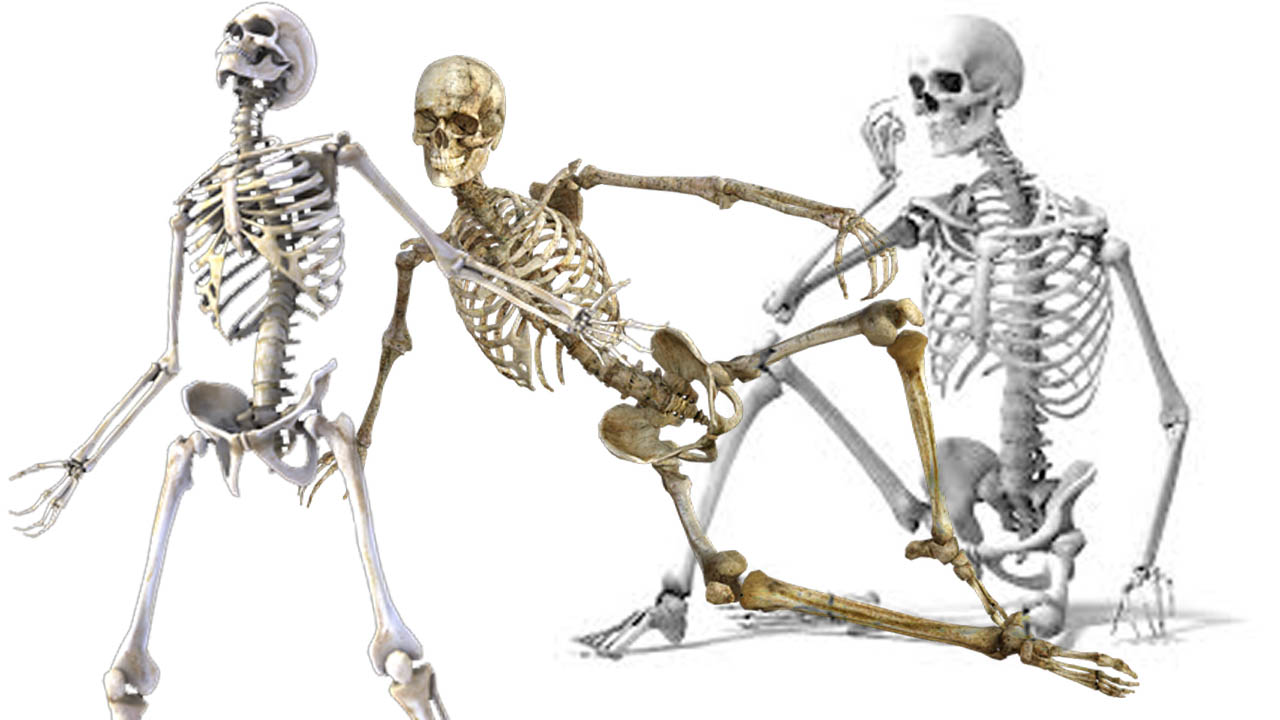 fogyás csontváz)
