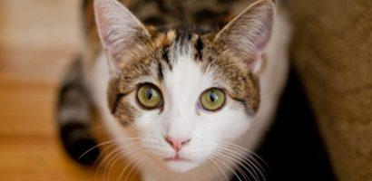Értjük-e a macskák nyelvét? (Cicaszótár)