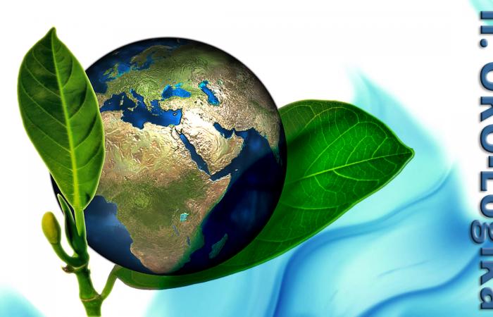 II. ÖKO-Logika Kárpát-medencei Környezetvédelmi Csapatverseny
